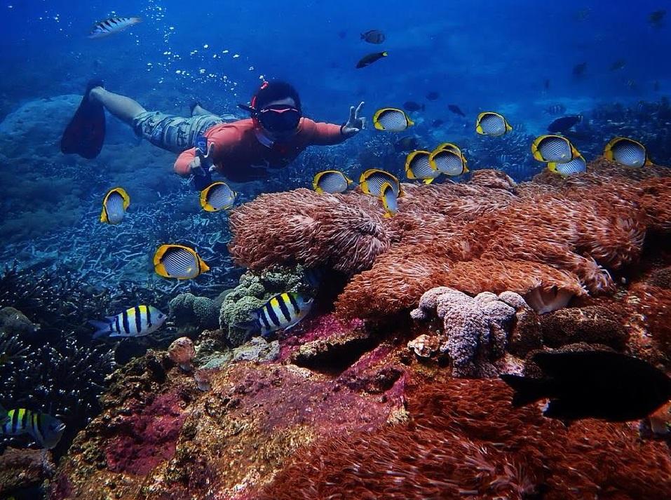 "Manta Ray Snorkeling Day Trip from Nusa Lembongan to Nusa Penida""    Lembonganwatersport.com"